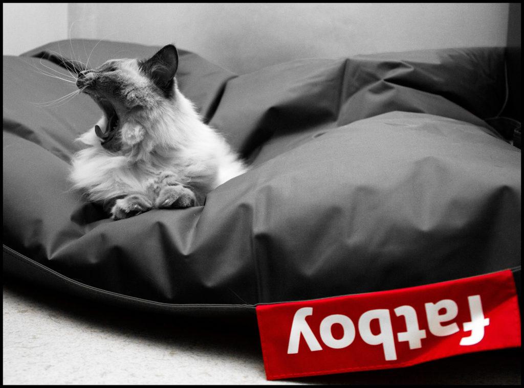 Sitzsack für Hunde 2014 auch für Katzen: fatboy