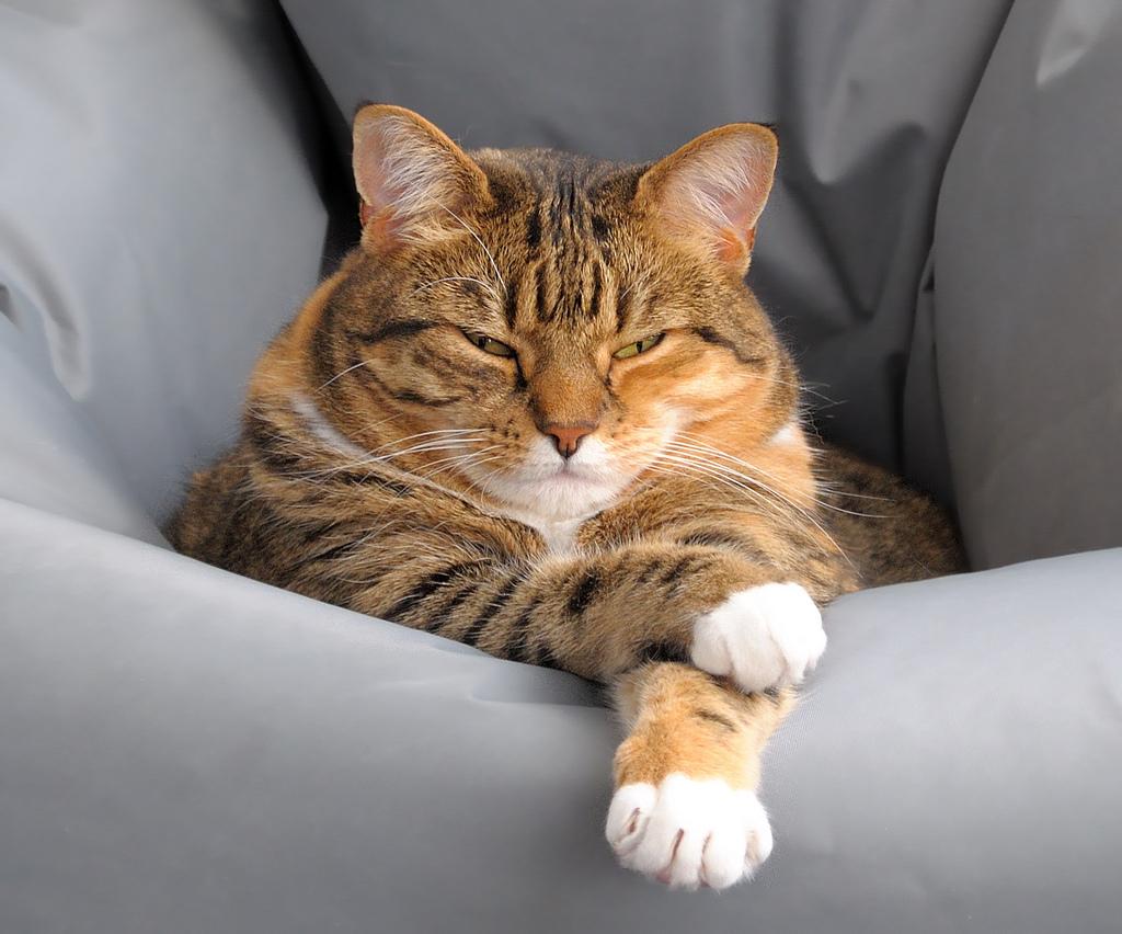 Sitzsack für Hunde 2014 Katze auf Fatboy